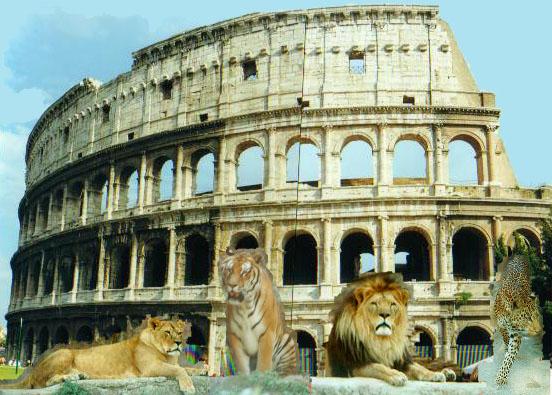 I felini al Colosseo...