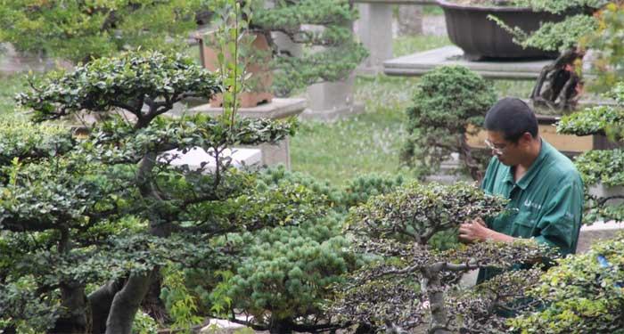 ABBIAMO OSPITI – ARTE: uno sguardo attivo sui bonsai