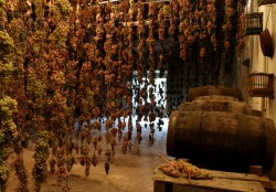 NL25 - 4 - vinsanto -grappoli a essiccare