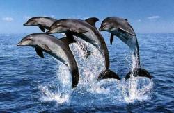 NL25 - spalla - flash news  - delfini guardiani 2