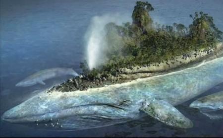 NL32 - giona - balena-isola