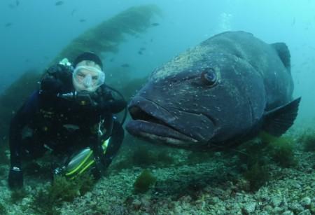 NL32 - giona - pesce giudeo