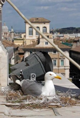 NL40 - riflessioni sugli uccelli -gabbiani