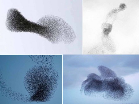 NL40 - riflessioni sugli uccelli -stormi