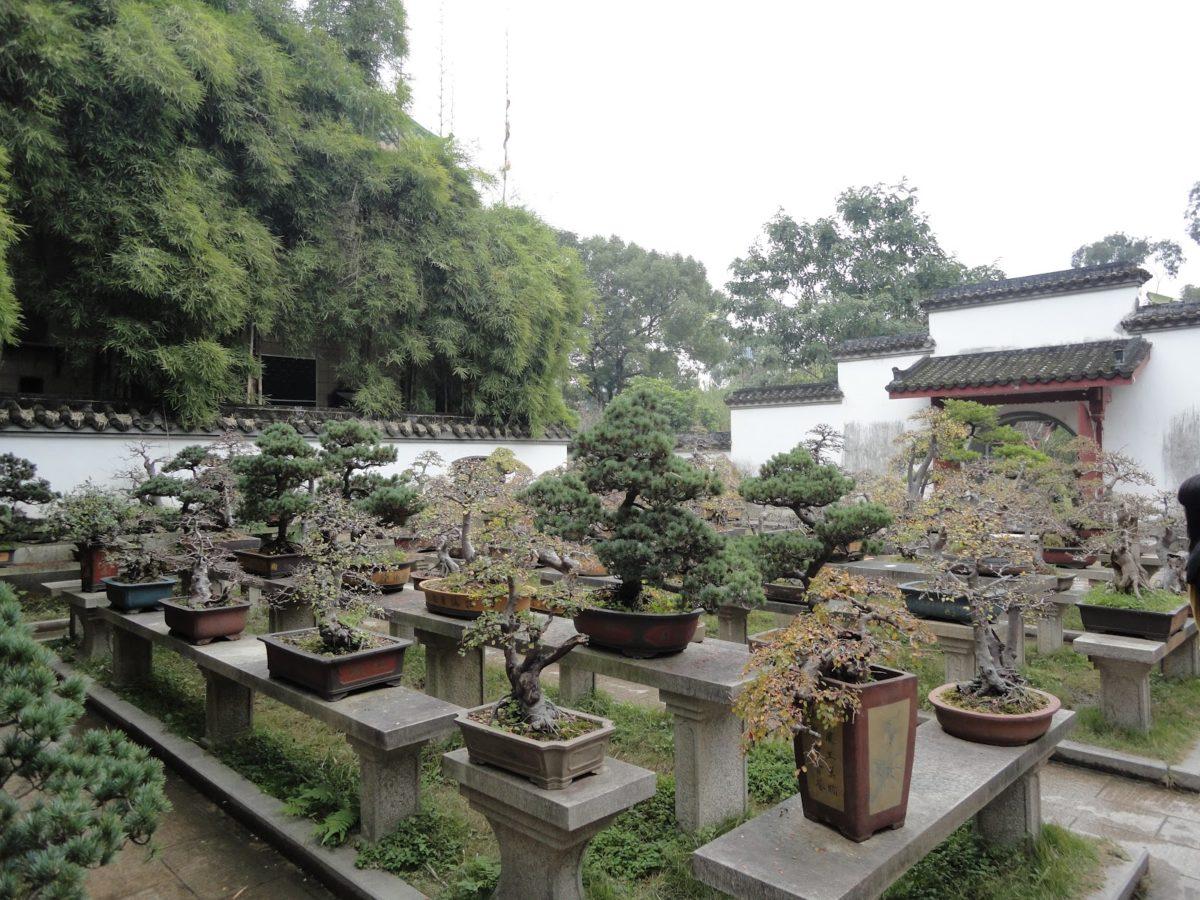 Abbiamo ospiti arte uno sguardo attivo sui bonsai la for Creare angoli di giardino