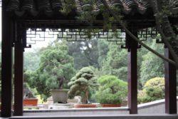 il bosco di bonsai a Suzhou