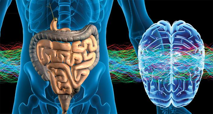 SCIENZE: i nostri due cervelli