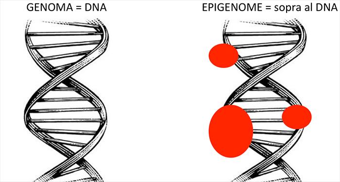 SCIENZA – L'epigenetica. Che cos'è?
